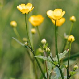 wildflowers spring freetoedit
