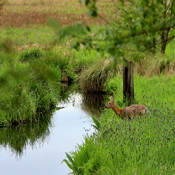 nature wildlife van