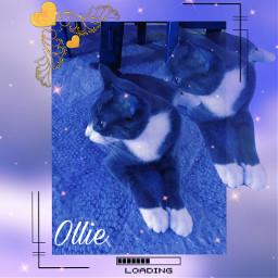 remix ollie my1yearoldkitten freetoedit