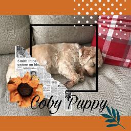 puppy mydog freetoedit