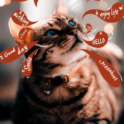 positive cat cute lovely freetoedit