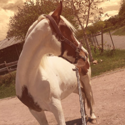 judy love horse