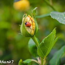 eidwithedhi newsnack qayoumkhan27 photpshoot_photogellary_new_status photographer cute instalove flowers roses landscape love loveyou share follow indonesiaa