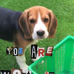 beagle dig srcyouareworthit youareworthit freetoedit