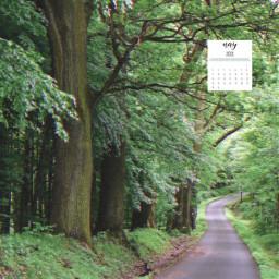 nature trees may freetoedit