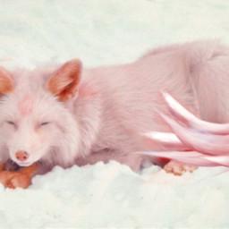 kitsune wildcraft freetoedit