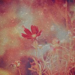 flower flowers freetoedit