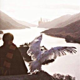 freetoedit harrypotter hermionegranger ronweasley lunalovegood nevillelongbottom wizardingworld suriusblack