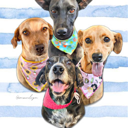 lindas turma pet cachorros dog