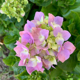 freetoedit flower bloom nature leaves garden