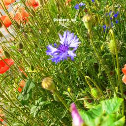 flower flowers aesthetic aestheticflowers summer colourfull goodday happy green