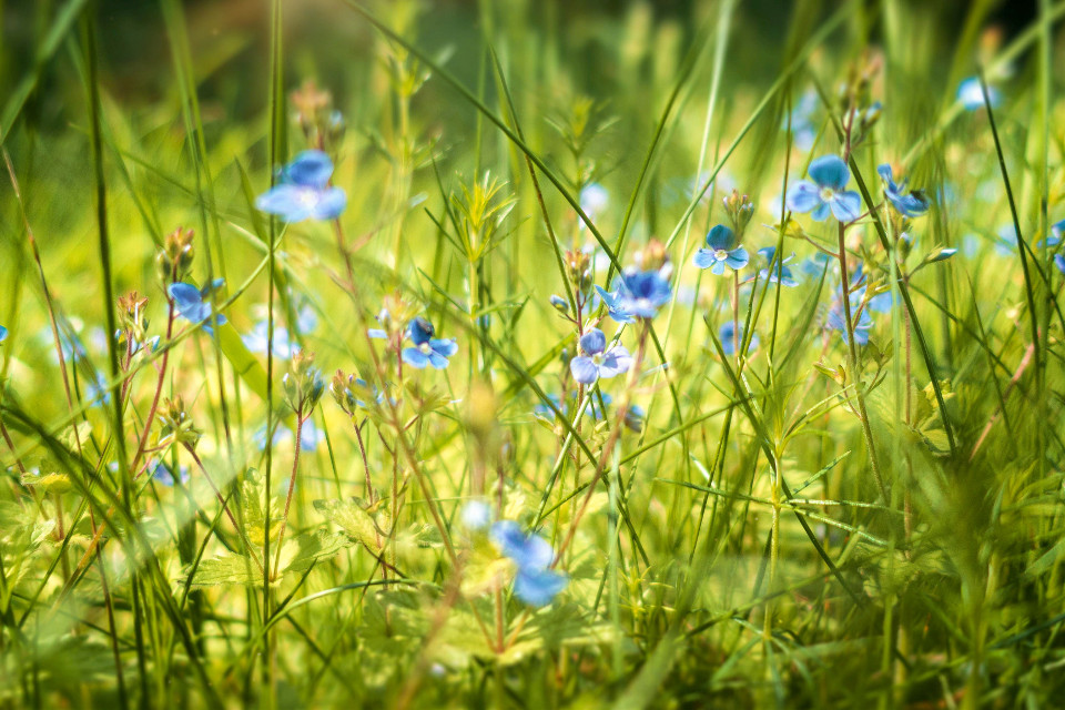 #meadow #flowers #nature