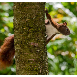 squirrel animal inmygarden nature naturephotography freetoedit