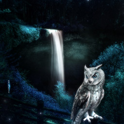freetoedit manipulation madewithpicsart fantasy heypicsart owl magical colochis89 i colochis89