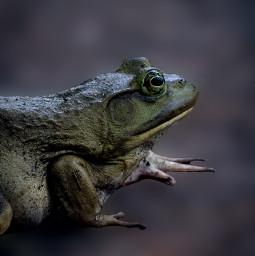 photo frog freetoedit
