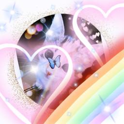 cute cat edit freetoedit