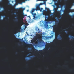 myphotography nature flowers flower photography freetoedit