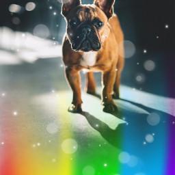dog doggy rainbow cutedog freetoedit
