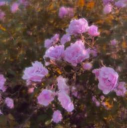 flowers glowyedit michellebaumphotography colorful hazy edit