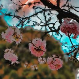 flowerframe flowerbackrounds springflowers pinkflower remixit floral freetoedit