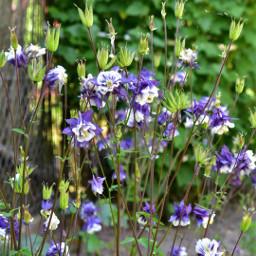 flowers springflowers freetoedit