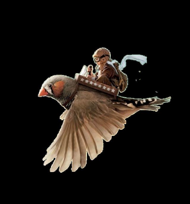 #ftestickers #bird #boy #flyingboy