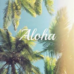aloha summer sun palmtrees sky ninahayess freetoedit