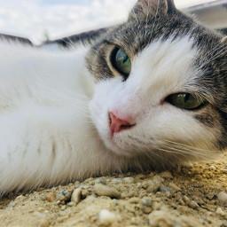 notremix cat