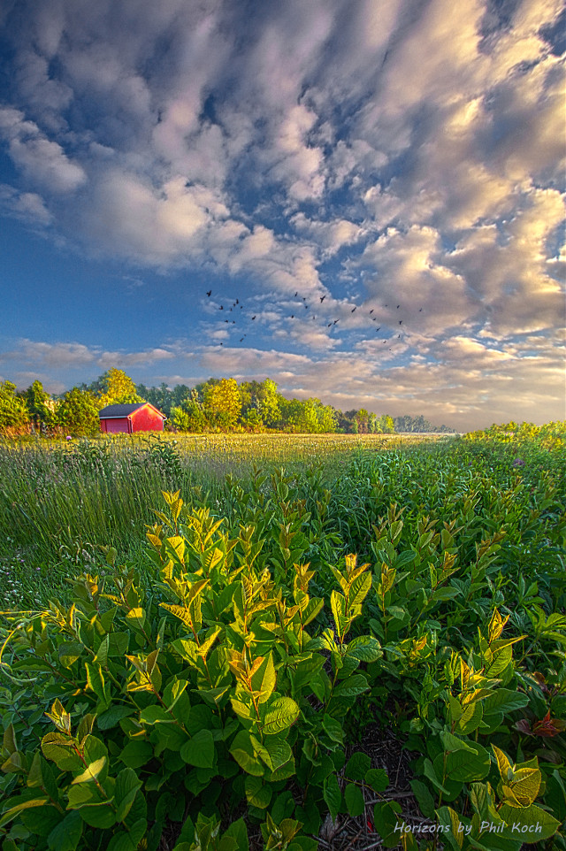 """"""" In Perfect Peace """" - Wisconsin Horizons by Phil Koch. Turning natural landscapes into portraits of nature. #freetoedit #remixit #nature #landscapephotography #beauty #pretty #landscape #beautiful #follow #fanart #peace #happytaeminday #popular #folow4follow #followme #love #art #summer #farming #rural"""