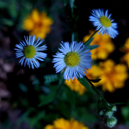 freetoedit flowers flowersphotography photography myphoto