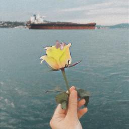 friends cute pic flower boats freetoedit