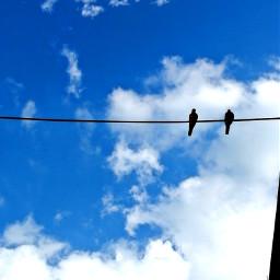 birds sky blue remixit freetoedit