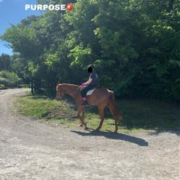 horses horse equine fadeykittens