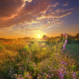 freetoedit remixit nature landscapephotography beauty pretty landscape beautiful follow fanart peace happytaeminday popular popularpage wildflowers flowers sunrise sunset