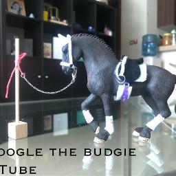 schleichhorses googlethebudgie