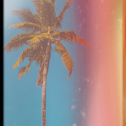 unsplash tropical mask aesthetic interesting cool summer like follow