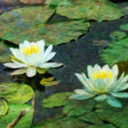 photo waterlilies freetoedit digitalpainting pond