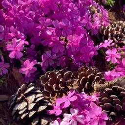 springtime pcmyfavoriteshot myfavoriteshot