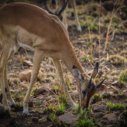 naturephotography animallover