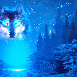 wolf night blue freetoedit