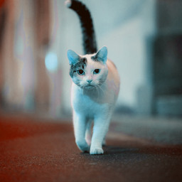 freetoedit cat like picsart photography violet
