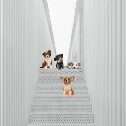 pets puppies dogs kittens cats freetoedit