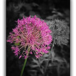nature naturephotography naturelovers moments samsungs20ultra lovebp feelings flowers pixartflower pinkflower lovely