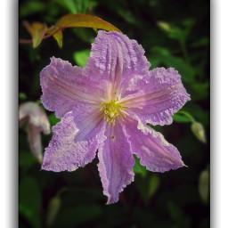 flowers nature naturephotography naturelovers moments bplove lowersaxony niedersachsen emotions zuhause athome beautiful samsungs20ultra enjoy