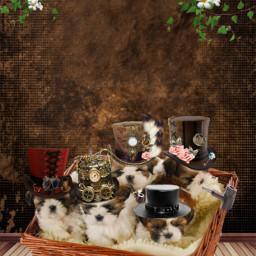freetoedit shitzulovers shitzu puppies steampunk