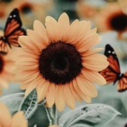 flowerpower freetoedit