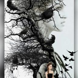 freetoedit darknessandbeauty darkart blackbirds
