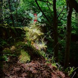 forestwalk freetoedit