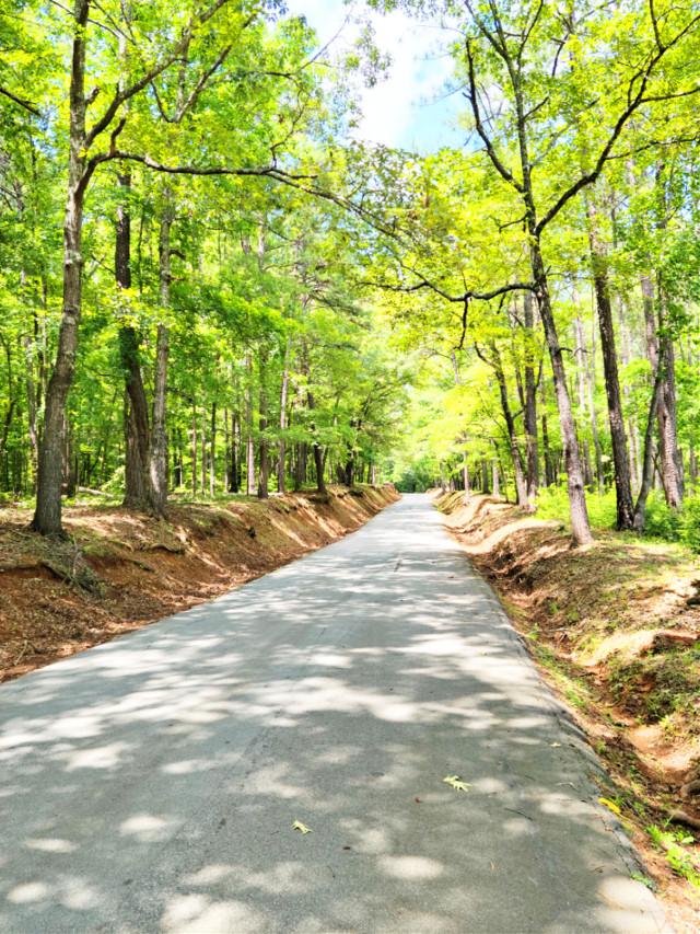 #outdoors #nature #naturelover #green #road #summer