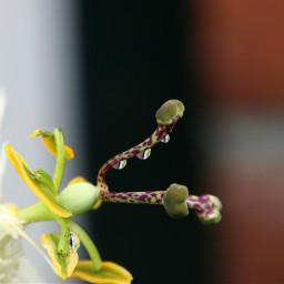 closeup nature flower drop beautiful